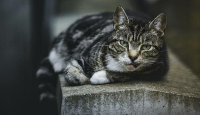 Cara Mengusir Kucing dengan Halus, Jangan Pakai Kekerasan!